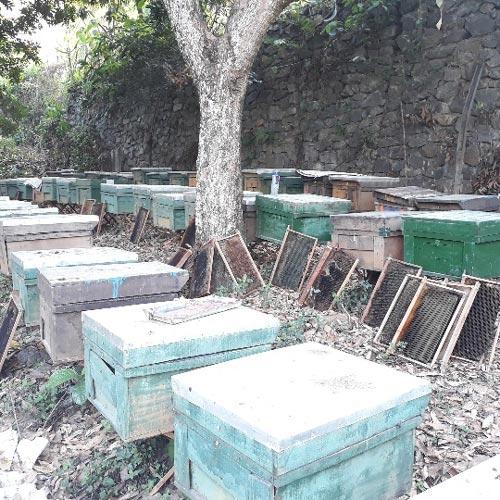 """Nuôi 500 đàn """"vo ve"""", nông dân xây được nhà lầu tiền tỷ - 2"""