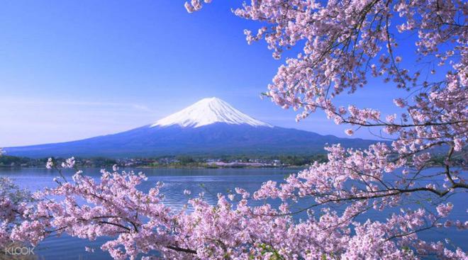 Cơ hội du lịch ngắm hoa anh đào cùng GoBear & KLOOK