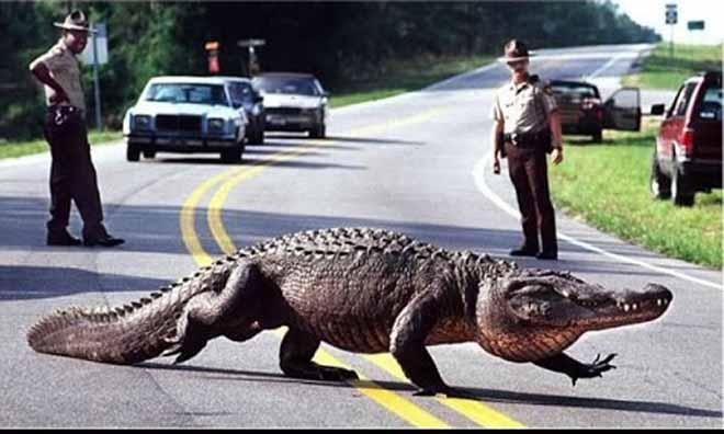 Zimbabwe: Bắn chết cá sấu khổng lồ chặn cổng bệnh viện, đe dọa người