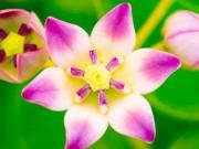 Tin tức sức khỏe - Nắm lá quý hỗ trợ điều trị viêm phế quản, đờm, ho 10 người dùng 9 người khen
