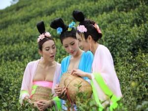 Bạn trẻ - Cuộc sống - Thiếu nữ Trung Quốc ăn mặc nóng bỏng đi hái trà