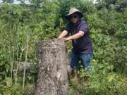An ninh Xã hội - Bắt PGĐ và nhân viên bảo vệ rừng thuê… lâm tặc phá rừng