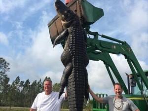 Thế giới - Mỹ: Tiêu diệt cá sấu khổng lồ bí mật ăn bò của dân