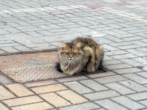 Thế giới - Mèo ngày ngày đến đúng chỗ bị chủ bỏ rơi suốt 1 năm