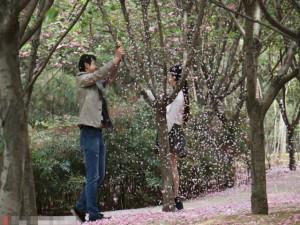 """Bạn trẻ - Cuộc sống - """"Soái ca"""" rung cây cho hoa rụng để bạn gái chụp ảnh"""