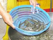 Thị trường - Tiêu dùng - Cá và khô cũng nhiễm chất cấm
