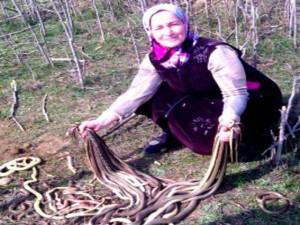 """Phi thường - kỳ quặc - Cụ bà 60 tuổi làm vườn """"hạ"""" một lúc 80 con rắn"""