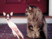 Bạn trẻ - Cuộc sống - Lý giải ý nghĩa giấc mơ về chó, mèo trong dân gian