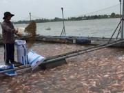 Thị trường - Tiêu dùng - Dùng chất cấm trong thủy sản: Hám lợi trước mắt, trả giá dài lâu
