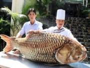 """Thị trường - Tiêu dùng - Cá hô """"khủng"""" hơn 1 tạ ở Campuchia về nhà hàng Sài Gòn"""