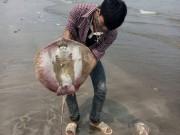 Tin tức trong ngày - Truy tìm độc tố khiến 200 người ngộ độc sau ăn hải sản