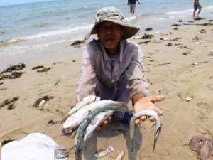 Thế giới - Cá miền Trung chết hàng loạt lên báo nước ngoài