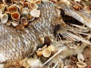 Thị trường - Tiêu dùng - Cá chết hàng loạt: Du lịch, thủy sản miền Trung bắt đầu ngấm đòn!
