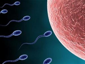 Sức khỏe đời sống - Tạo thành công tinh trùng từ tế bào da