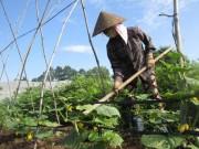 Thị trường - Tiêu dùng - Cơ hội cho nông nghiệp hữu cơ