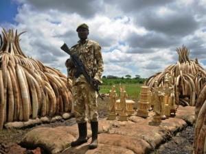 Thế giới - Kenya tiêu hủy số ngà voi lớn nhất lịch sử thế giới