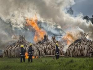 Thế giới - Ảnh: Kenya tẩm xăng đốt 100 tấn ngà voi trị giá 2.200 tỉ