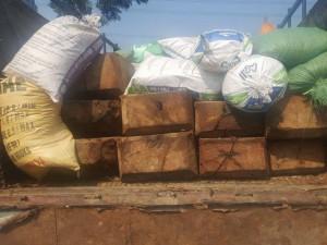 An ninh Xã hội - Bắt xe tải chở gỗ lậu ngụy trang bằng mùn cưa