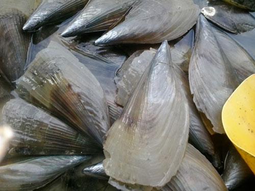 15 món ăn hải sản ngon nổi tiếng không nên bỏ qua - 14