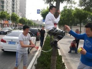 Bạn trẻ - Cuộc sống - Chú rể bị dán chặt trên cây trước đêm tân hôn