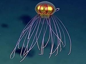Thế giới - Phát hiện loài sứa như UFO dưới biển sâu