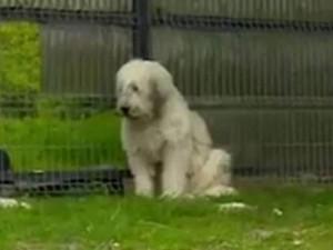 Thế giới - Chủ chết 5 năm, chó vẫn ngày đêm đợi cổng