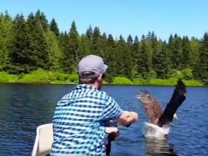 Thế giới - Đại bàng đầu trọc ngang nhiên cướp cá trước mặt cần thủ