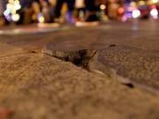 Tin tức trong ngày - Nắp hầm kỹ thuật phố đi bộ Nguyễn Huệ hư hỏng hàng loạt