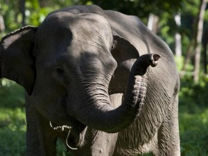 Du lịch - Indonesia: Chụp ảnh, một phụ nữ bị voi giày chết