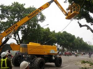 Tin tức trong ngày - Hà Nội sắp cử người sang Trung Quốc học trồng cây xanh