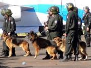 An ninh Xã hội - 100 cảnh sát cùng chó nghiệp vụ vây ổ ma túy Bình Thuận