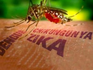 Sức khỏe đời sống - Virus Zika vẫn tiếp tục lan rộng