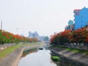 Tin tức trong ngày - Ảnh: Sông Tô Lịch đẹp lạ mùa phượng vĩ nở hoa