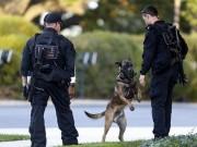 Thế giới - Biệt tài của 2 loại chó nghiệp vụ bảo vệ ông Obama ở VN