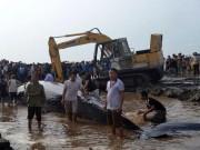 Tin tức trong ngày - Dùng máy xúc cứu cá voi khổng lồ mắc cạn ở biển Nghệ An