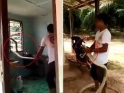 Bạn trẻ - Cuộc sống - Clip: Chàng trai tay không bắt rắn hổ mang khổng lồ