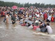 Tin tức trong ngày - Cận cảnh cuộc giải cứu cá voi 12 tấn ở Nghệ An