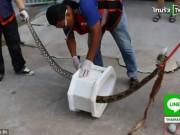"""Phi thường - kỳ quặc - Thái Lan: Đang ngồi bồn cầu bị rắn dài 3m ngoạm """"của quý"""""""