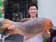 """Tin tức Ẩm thực - Nhà hàng chi đậm mua cá """"khủng"""" về làm Chả cá Lã Vọng"""