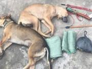 An ninh Xã hội - Nghi can trộm chó dùng ớt bột tấn công lực lượng truy bắt