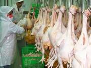 Thị trường - Tiêu dùng - Cấp gần 100 giấy chứng nhận chuỗi thực phẩm an toàn