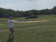 Thể thao - Kinh hãi với cá sấu khổng lồ trên sân golf
