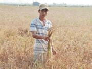 Thị trường - Tiêu dùng - Việt Nam thiệt hại hơn 15.000 tỷ đồng vì hạn hán, ngập mặn