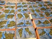 An ninh Xã hội - Bắt lô lá cây lạ chứa ma túy cực mạnh tại Tân Sơn Nhất