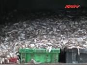 Thị trường - Tiêu dùng - Bắt xe tải chất đầy 4 tấn cá bốc mùi hôi thối