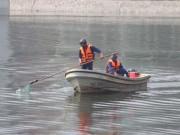Tin tức trong ngày - Hồ Hoàng Cầu sạch bóng cá chết sau một đêm