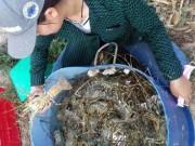 Tin tức trong ngày - Tôm hùm, cá chết hàng loạt ở vùng biển Phú Yên