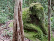 Thế giới - Lộ hàng loạt thành phố trung cổ trong rừng Campuchia