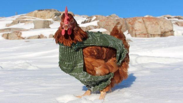 Cô gà mái 2 năm lênh đênh trên đại dương - 9