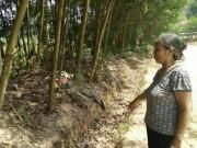 An ninh Xã hội - Rùng mình lời khai người mẹ bỏ xác con trong bụi rậm
